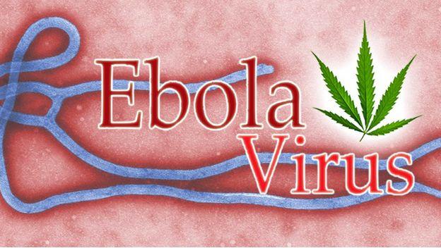 ebola cannabis