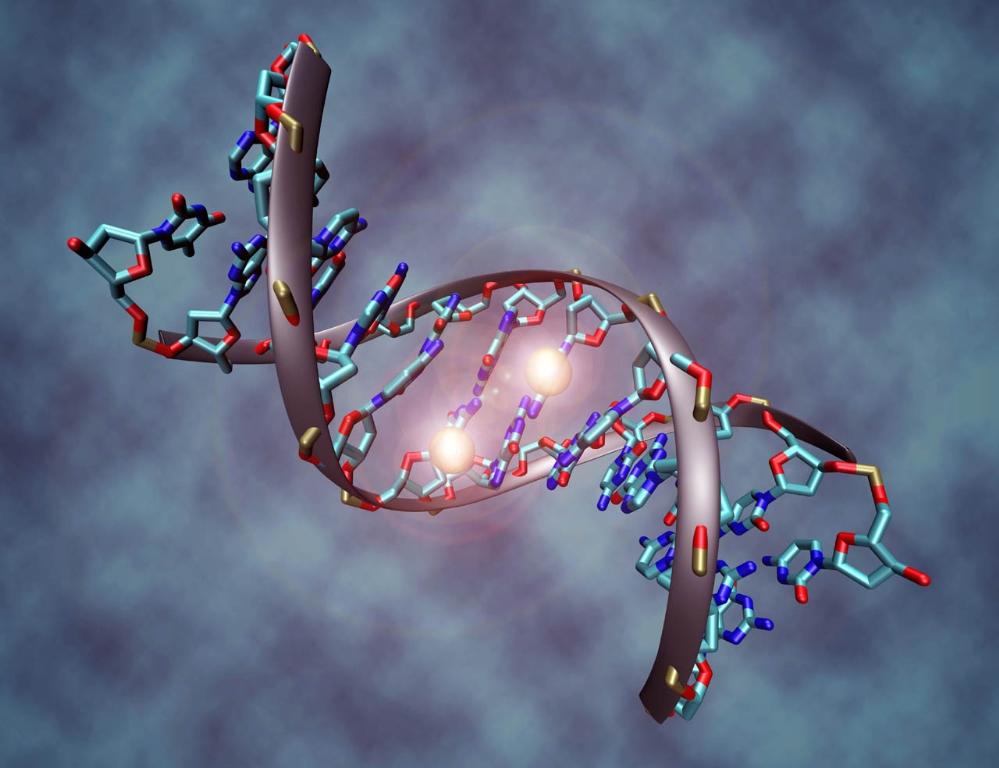 8f01bc_GENOMA-HUMANO